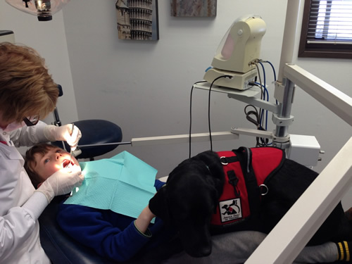 service dog dentist