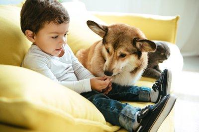 boy cat dog
