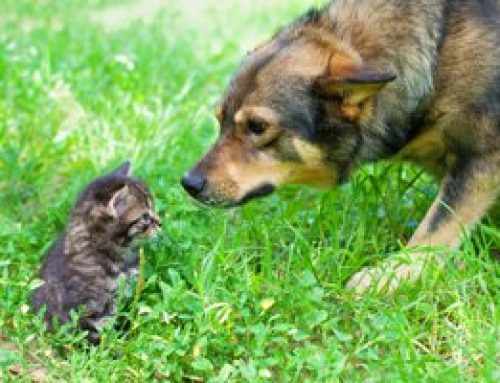 Choosing the Best Pet for Your Family