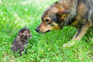 dog kitten