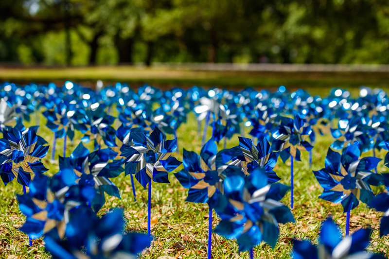 Pinwheels commemorating Child Abuse Prevention Month