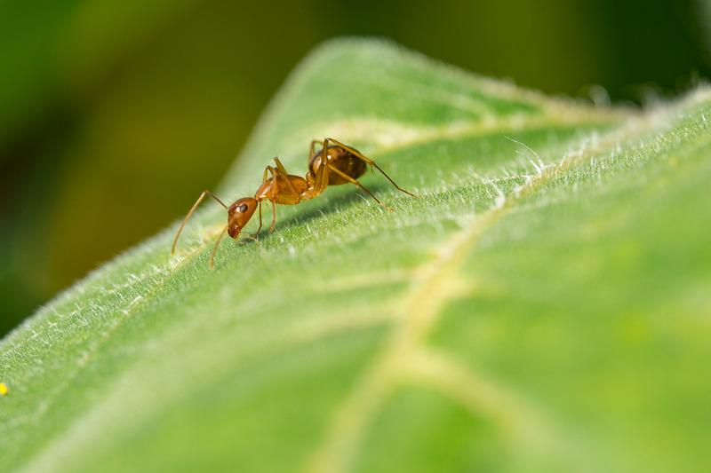 Ant crawling on a leaf
